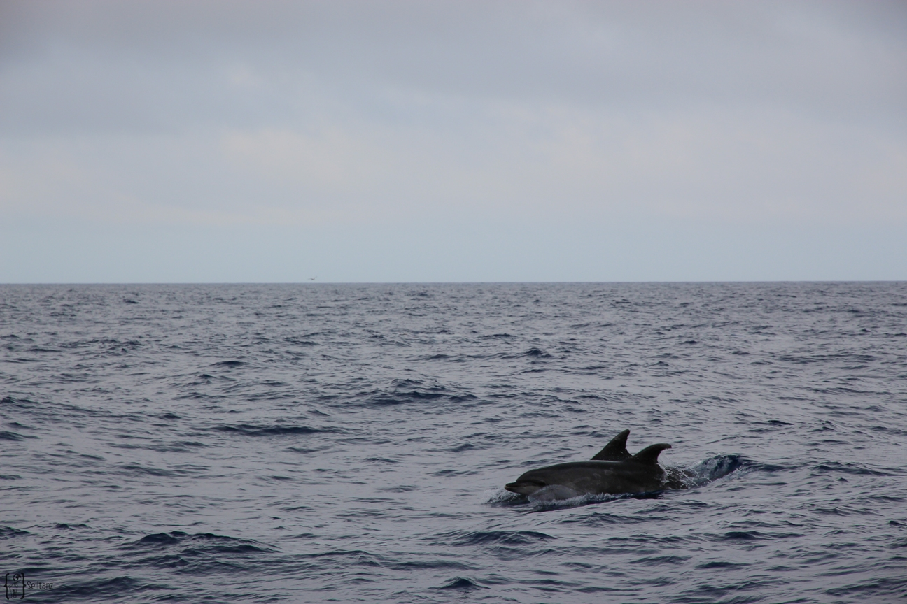 14 Whale Watching Tour Pico