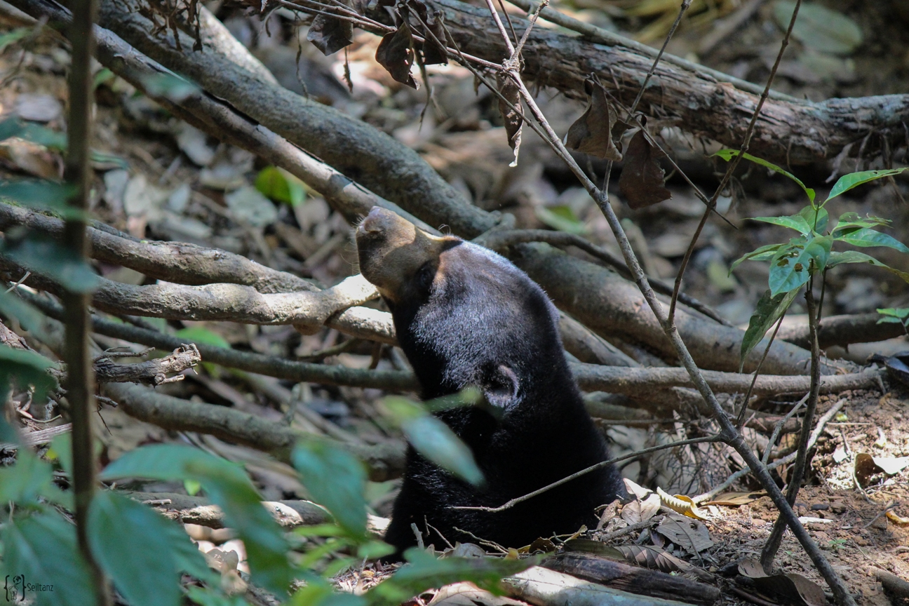 5 Bornean Sun Bear Conservation Centre