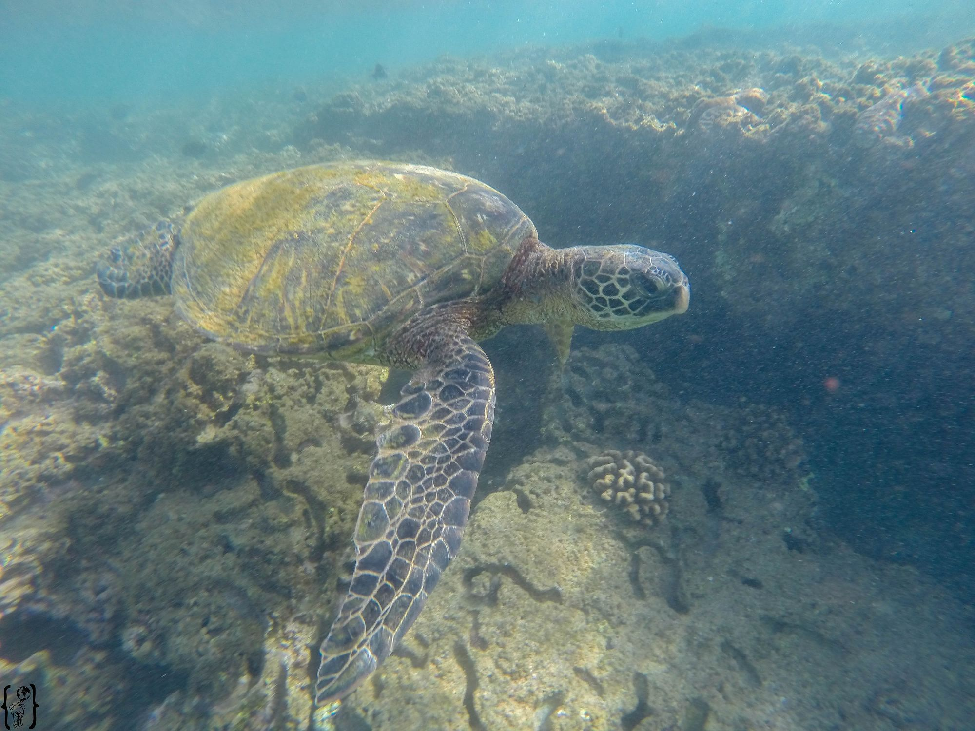 13 Oahu snorkeling with turtles every day