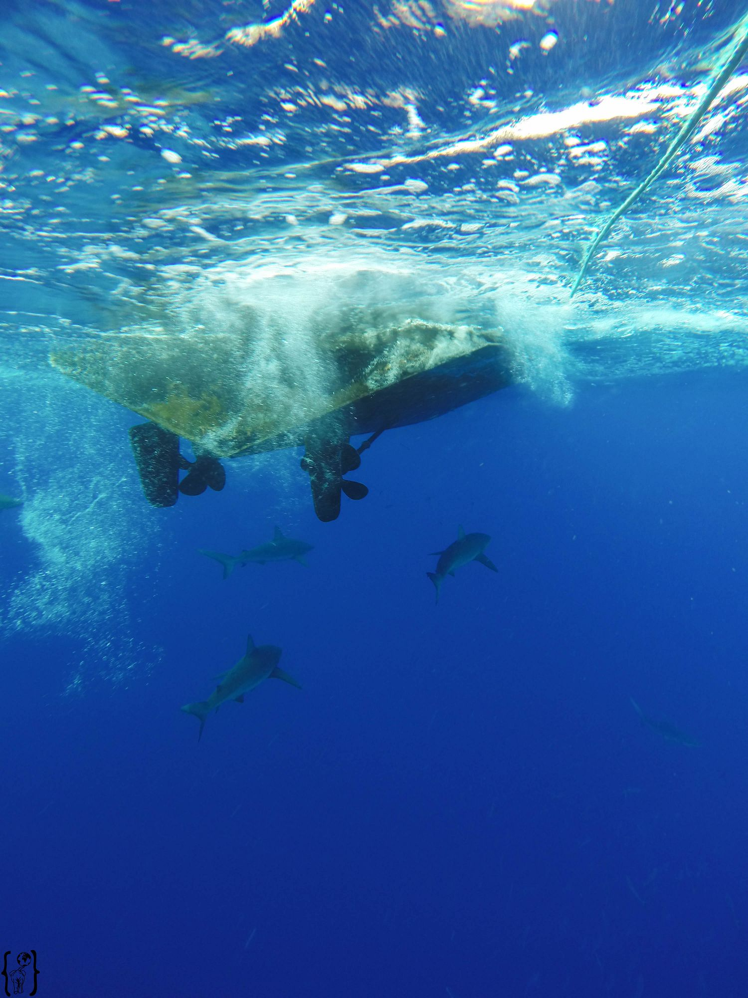 17 Cage Dive Boat Oahu