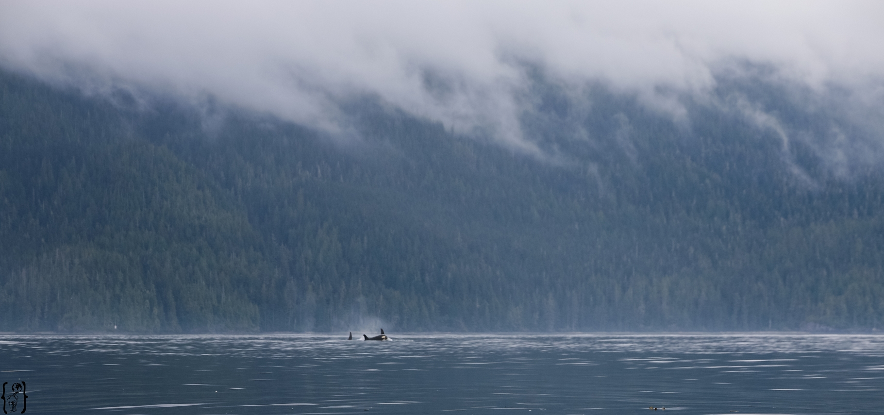 kayaking-with-orcas